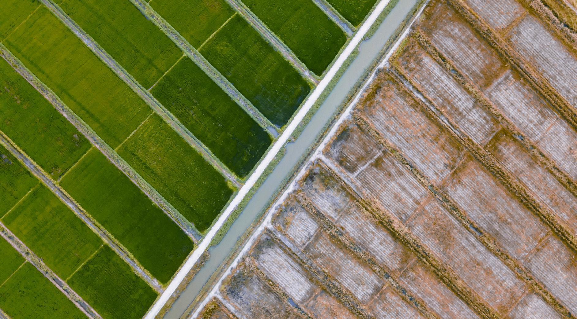 以创新赋能绿色食品产业生态